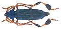 Phyllocnema (Phyllometalla) viridicostata Aurivillius, 1887 (31395115746).png