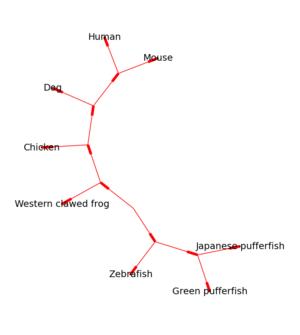 Biopython - Figure 2: The same tree as above, drawn unrooted using Graphviz via Bio.Phylo