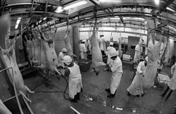 Pig, meat industry, slaughterhouse Fortepan 76068.jpg