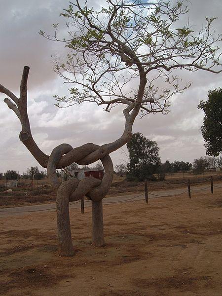 עץ הקשר