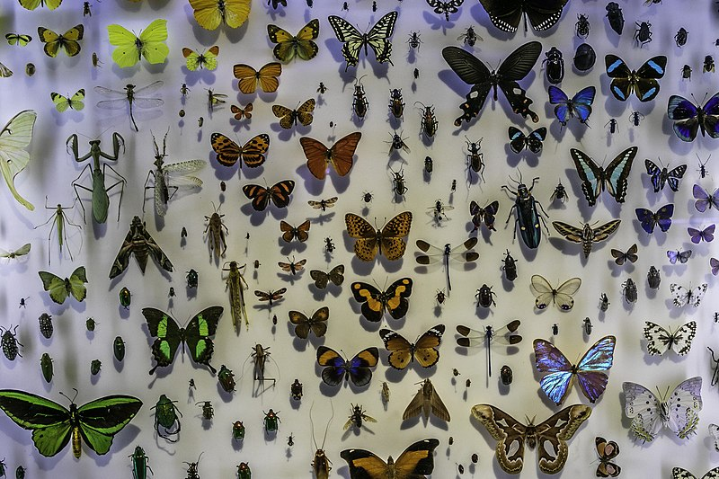 שטיינהרדת מוזיאון הטבע