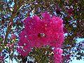 Pink Tree Flowers.jpg