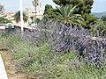 Plants - panoramio.jpg