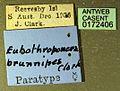 Platythyrea brunnipes casent0172406 label 1.jpg