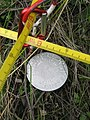 Plot marker for vegetation monitoring in Denali National Park (8446139394).jpg