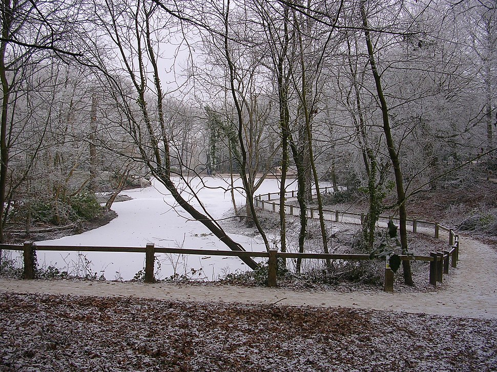 Pond at Goff's Park Crawley January 2009