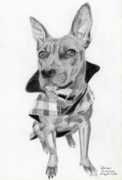 Hand-drawn portrait of a dog wearing a flannelette coat.