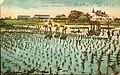 Postcard of Japanese rice farm near Houston, Texas (10001082).jpg