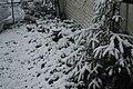 Poughkeepsie, NY snowfall, December 5, 2009 3.JPG