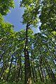 Prírodná rezervácia Borsukov vrch, Národný park Poloniny (06).jpg