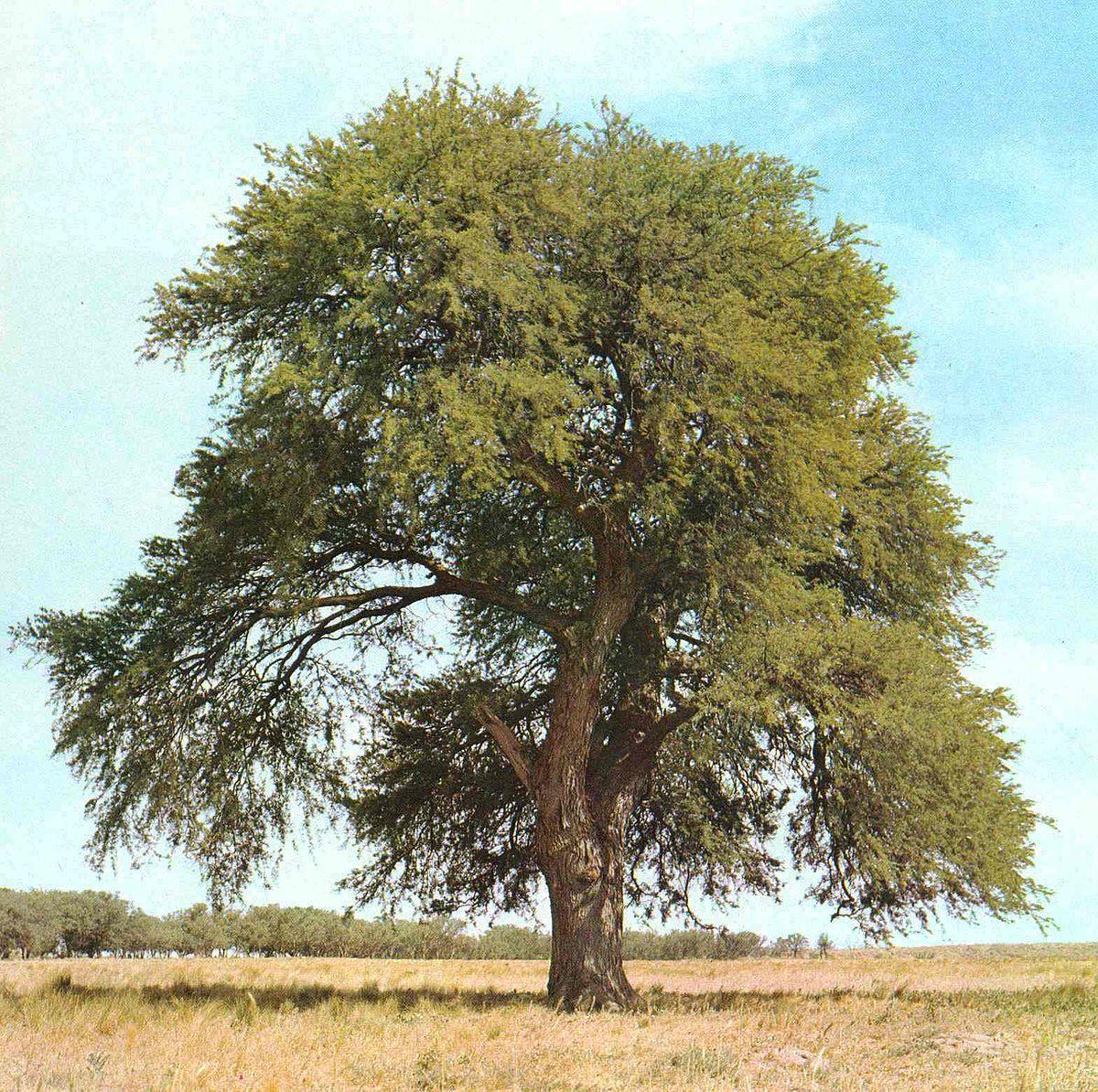 صورة شجرة كرتون