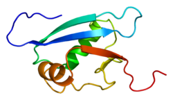 Protein UFM1 PDB 1j0g.png