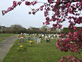 Prunus Blossom and Marsh Gibbon cemetery - geograph.org.uk - 559622.jpg