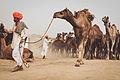 Pushkar, Rajasthan - India (15789530689).jpg