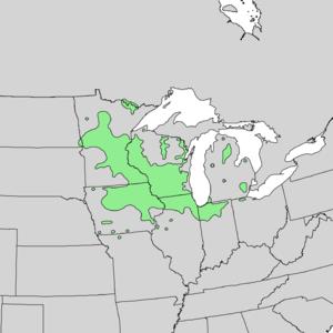 Quercus ellipsoidalis - Image: Quercus ellipsoidalis range map 1