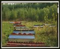 RIDGES OF GRAVES - St. Nicholas Russian Orthodox Churches, Eklutna, Anchorage, AK HABS AK,2-EKLU,1-7 (CT).tif
