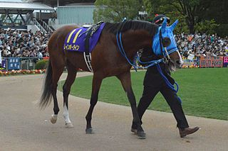 Rainbow Line Japanese-bred Thoroughbred racehorse
