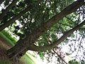 Rameno stromu.jpg