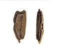 Ramulus nematodes - eggs.jpg
