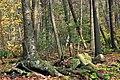 Raven Trail (2) (30586215271).jpg