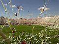 Recibimiento hinchada Unión clásico 2011.jpg
