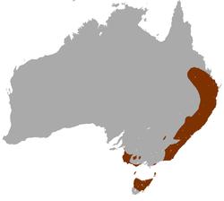 Distribución del ualabí de cuello rojo