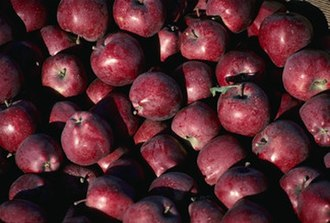 Timeline of United States discoveries - Bushels of Red Delicious apples.
