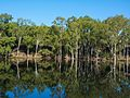 Reflection of trees at Abu.jpg