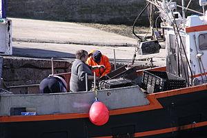 Retour de la pêche à la seiche du fileyeur Jason IV (41).JPG