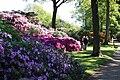 Rhododendronpark Bremen 20090513 038.JPG