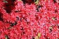 Rhododendronpark Bremen 20090513 243.JPG