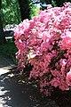 Rhododendronpark Bremen 20090513 267.JPG
