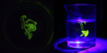 Riboflavin Fluorescence 06.png