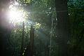 Rise and Shine (10234259745).jpg