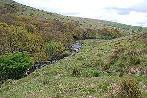 River Erme - The river leaving its gorge with part of Piles Copse on the left