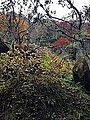 "Rocks with moss in ""Auberge Kaedenoki"" in Shin-Yabakei Valley.jpg"