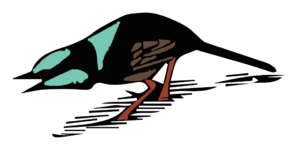 Distraction display - Rodent-run distraction display by superb blue wren. Redrawn from Rowley, 1962.