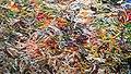 Rubberband art at Stockholm 1.jpg