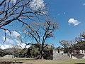 Ruinas MAYA Copan Honduras 01.jpg