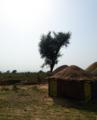 Rural Life in pakistan.png