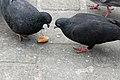 Rynek Główny Pigeons (3451464117).jpg