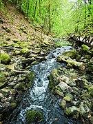 Söderåsen landscape swamp waterfall.jpg
