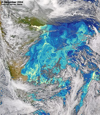 Antarctic Circumpolar Current - The Falkland Current transports nutrient-rich cold waters from the ACC north toward the Brazil–Malvinas Confluence. Phytoplankton chlorophyll concentration are shown in blue (lower concentrations) and yellow (higher concentrations).