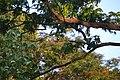 SAN BIRDS 36.jpg