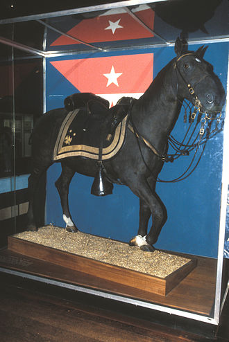 Philip Sheridan - Rienzi, stuffed and on display at the National Museum of American History