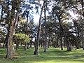 Sabinar de Calatañazor.JPG