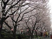 Sakurazaka 03.jpg