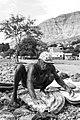 Salaison du poisson. Pêche traditionnelle à Tarafal de Monte Trigo, île de Santo Antao, Cap-Vert.jpg