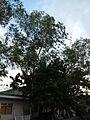 SanNicolas,Batangasjf2252 11.JPG