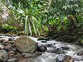 San Isidro Costa Rica 3.jpg